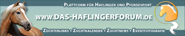 Haflingerforum